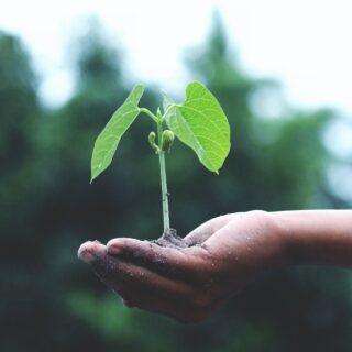 Rast i razvoj